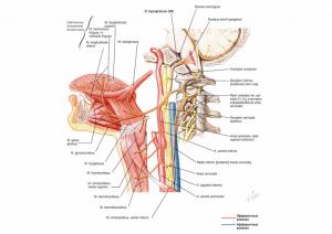 anatomy94-760x539