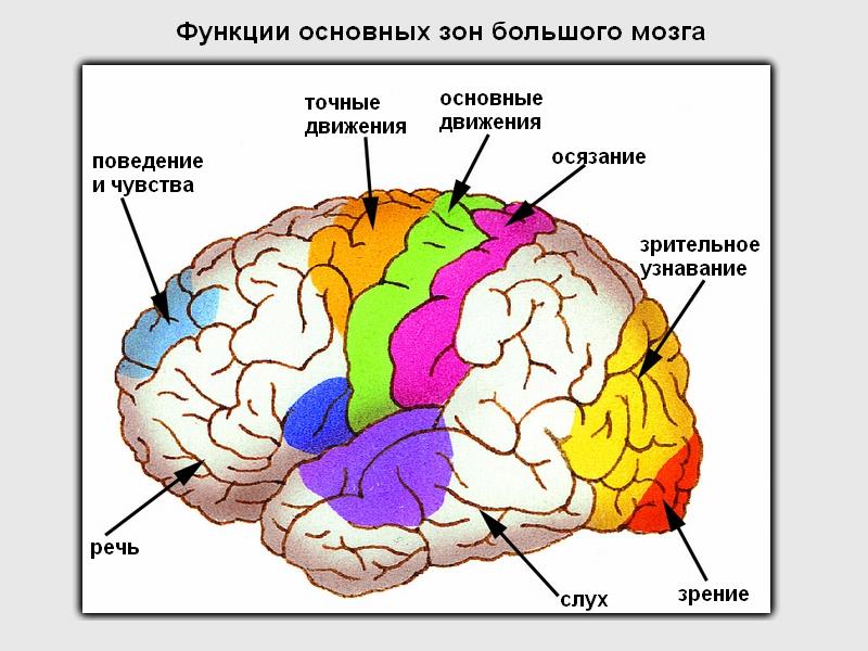 Кафедра неврологии с курсом